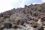 kilimanjaro-19