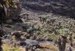 kilimanjaro-49